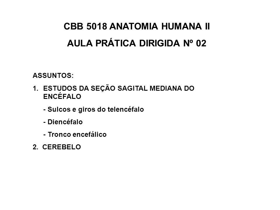 AULA PRÁTICA DIRIGIDA Nº 02