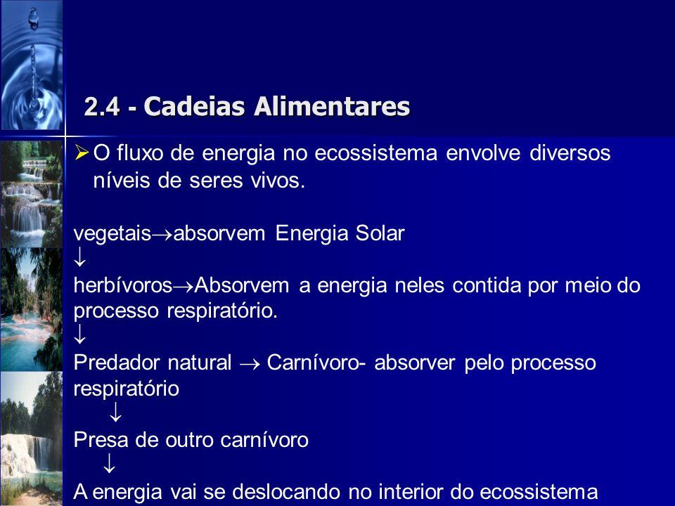 2.4 - Cadeias AlimentaresO fluxo de energia no ecossistema envolve diversos níveis de seres vivos.