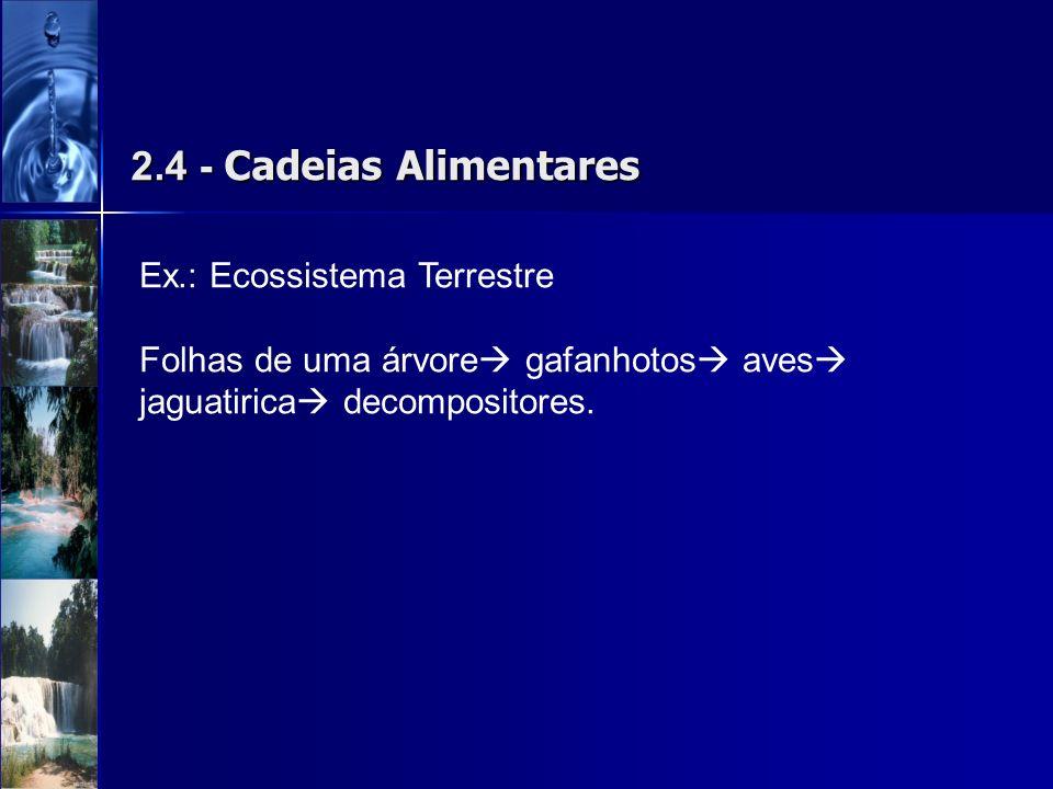 2.4 - Cadeias Alimentares Ex.: Ecossistema Terrestre