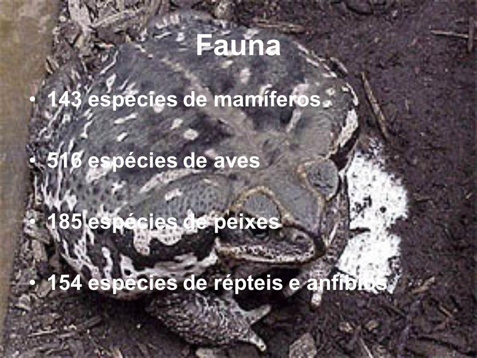 Fauna 143 espécies de mamíferos 516 espécies de aves