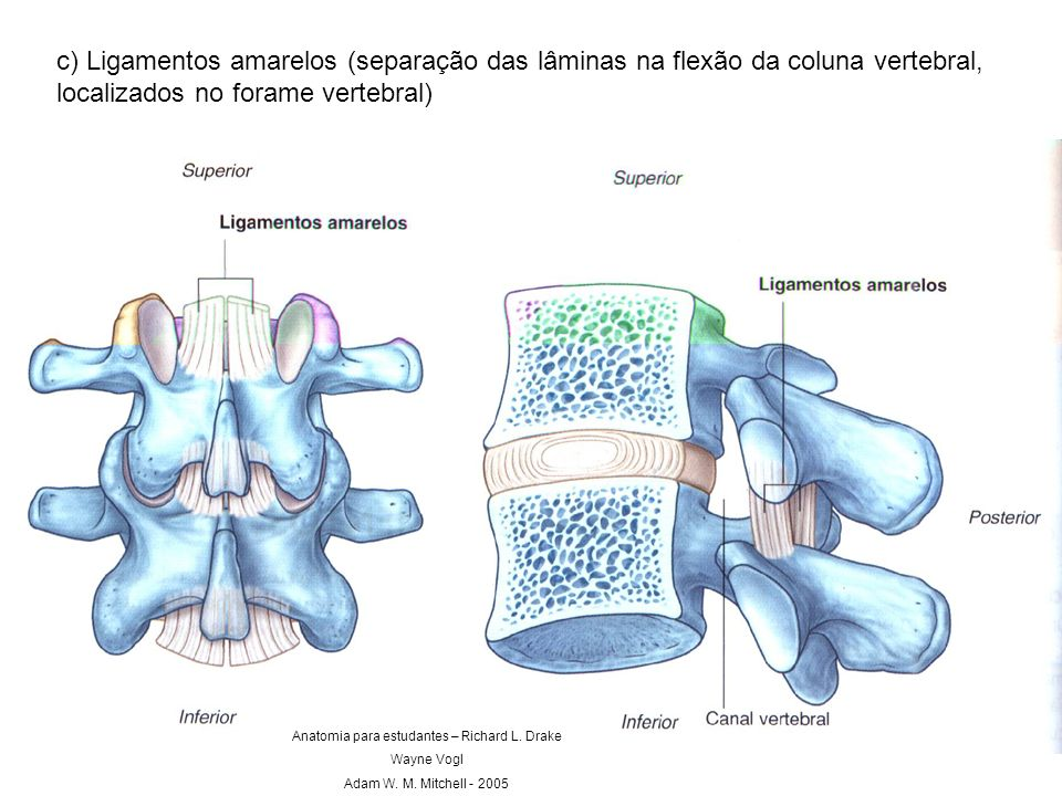 Anatomia para estudantes – Richard L. Drake