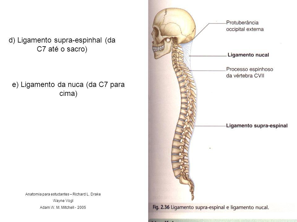 d) Ligamento supra-espinhal (da C7 até o sacro)