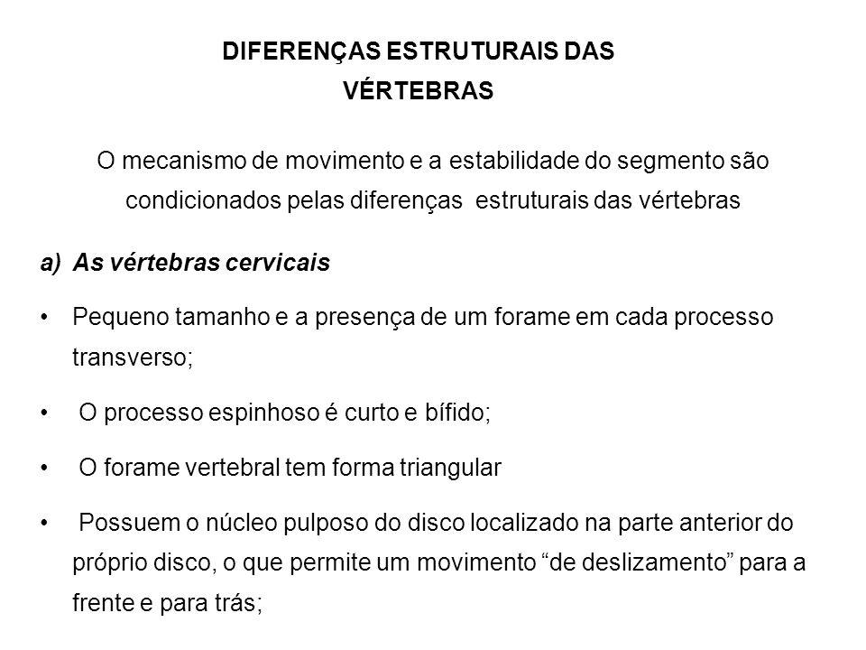 DIFERENÇAS ESTRUTURAIS DAS VÉRTEBRAS