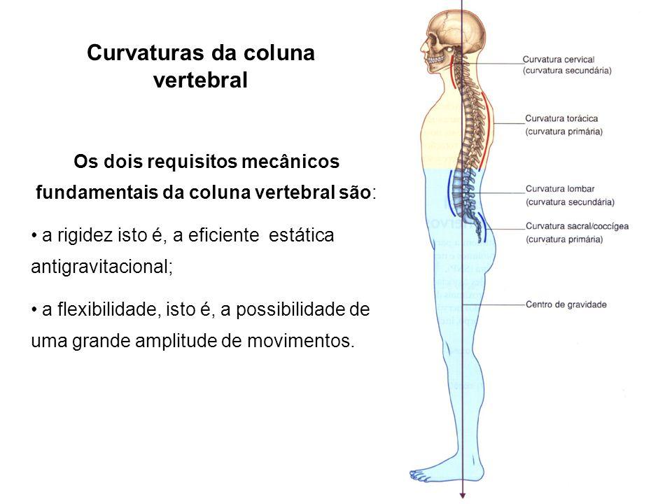 Curvaturas da coluna vertebral