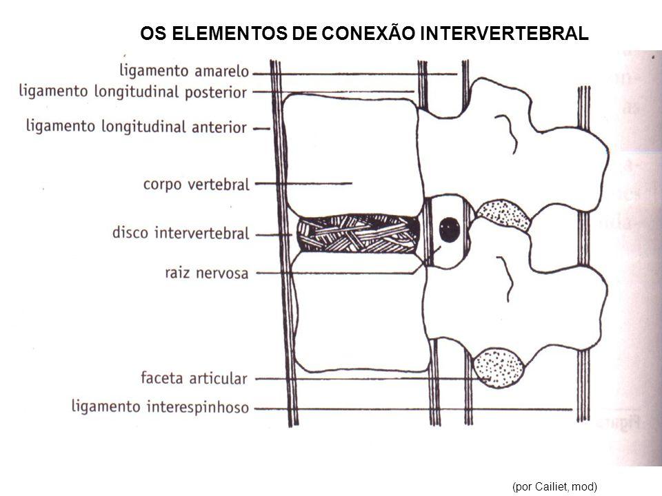 OS ELEMENTOS DE CONEXÃO INTERVERTEBRAL