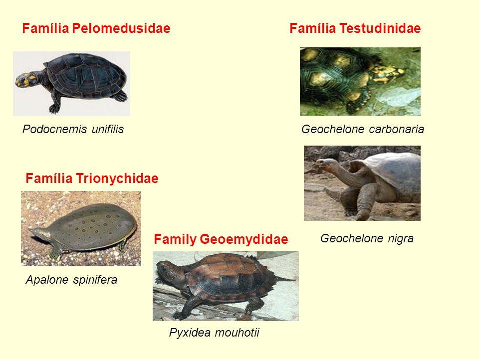 Família Pelomedusidae