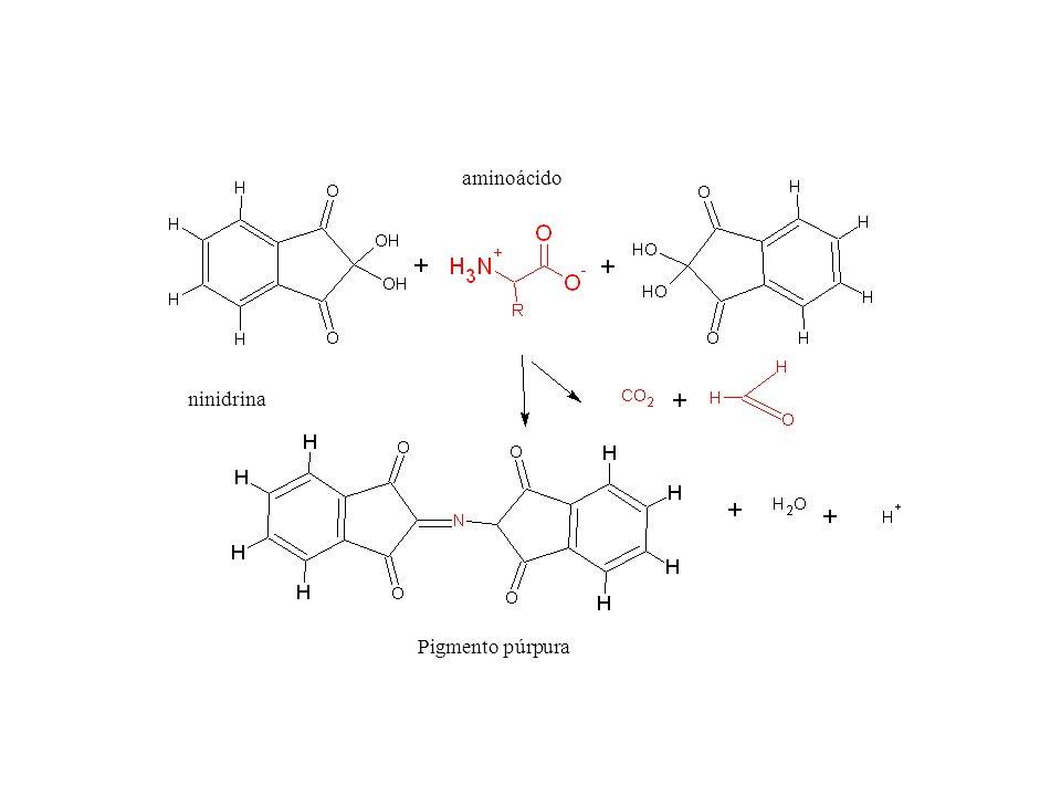 aminoácido ninidrina Pigmento púrpura