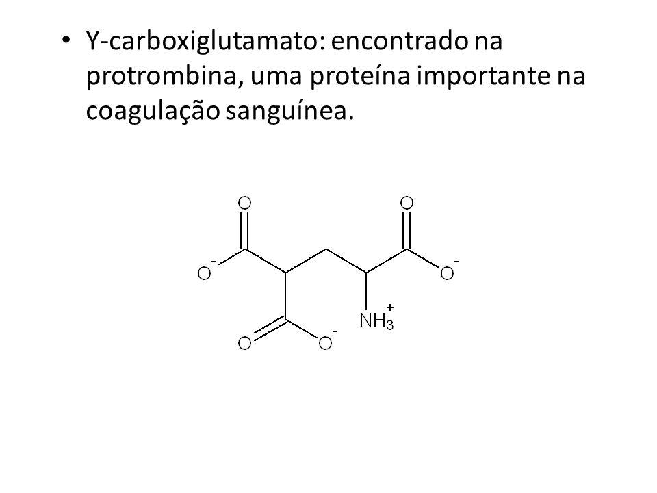 Y-carboxiglutamato: encontrado na protrombina, uma proteína importante na coagulação sanguínea.