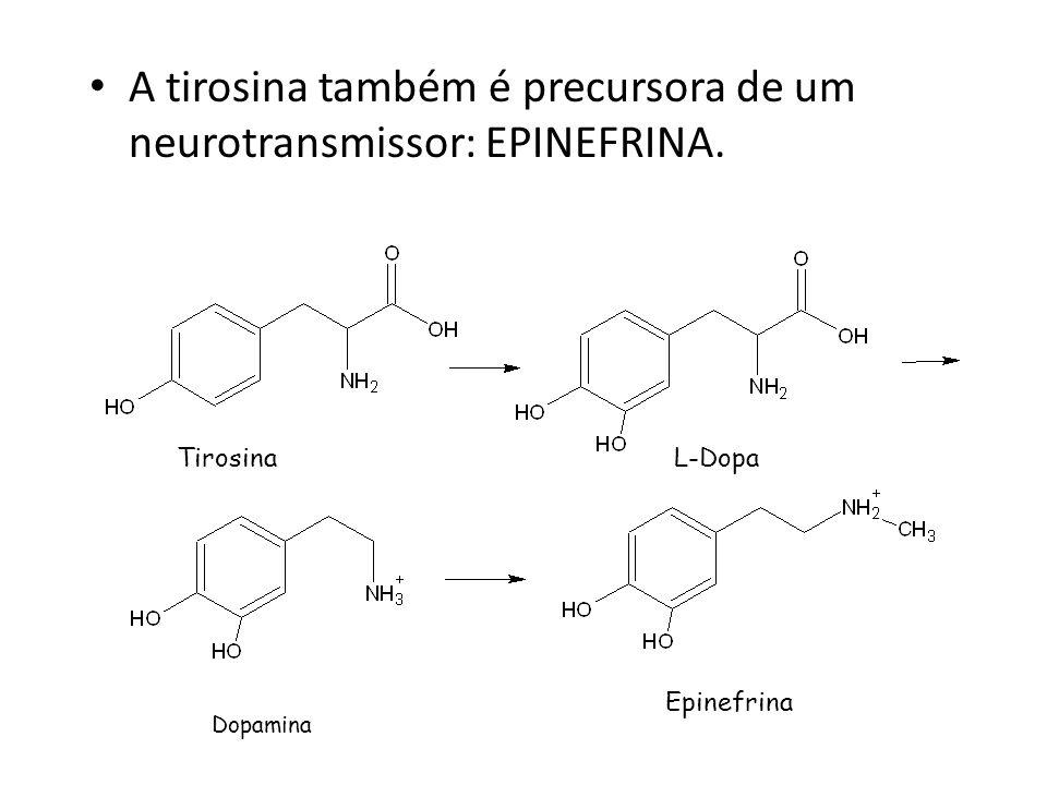 A tirosina também é precursora de um neurotransmissor: EPINEFRINA.