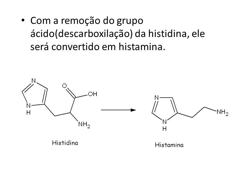 Com a remoção do grupo ácido(descarboxilação) da histidina, ele será convertido em histamina.