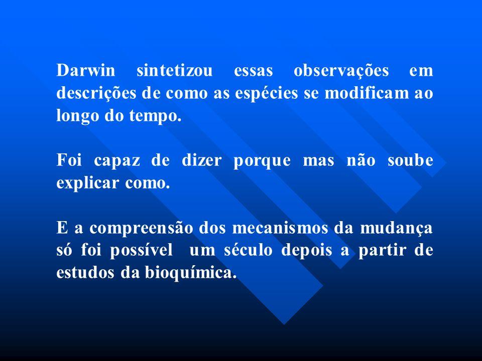 Darwin sintetizou essas observações em descrições de como as espécies se modificam ao longo do tempo.