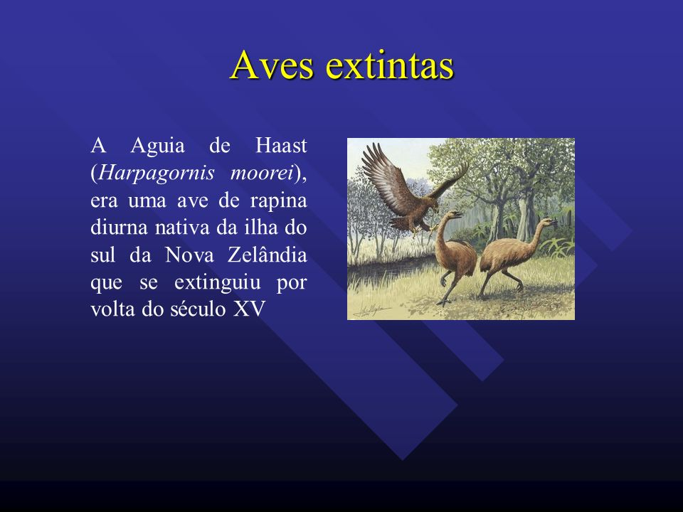 Aves extintas
