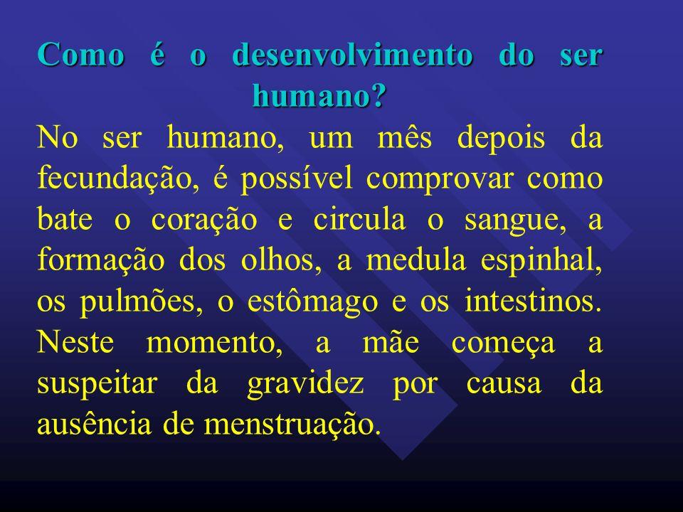 Como é o desenvolvimento do ser humano