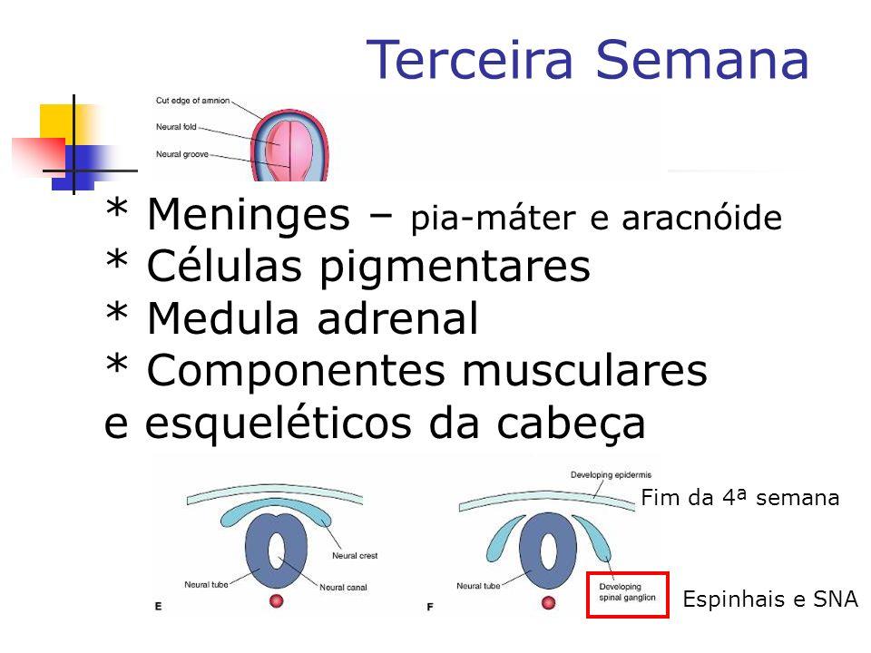 * Meninges – pia-máter e aracnóide * Células pigmentares
