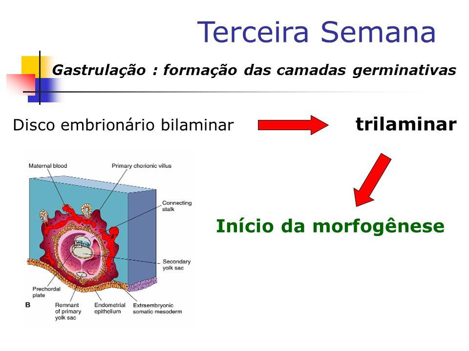 Início da morfogênese Disco embrionário bilaminar trilaminar