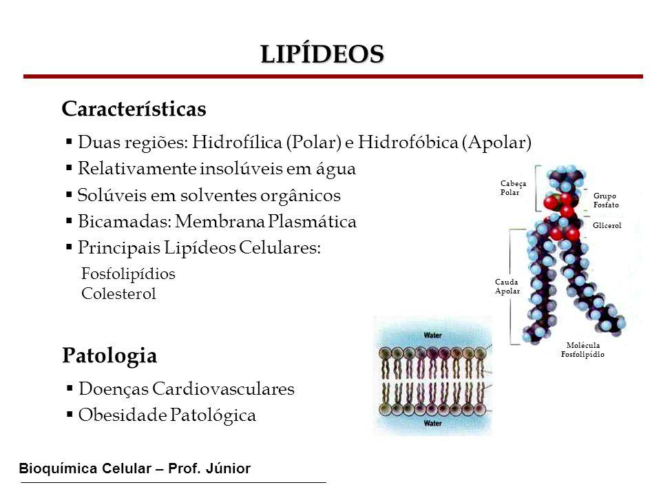 LIPÍDEOS Características Patologia