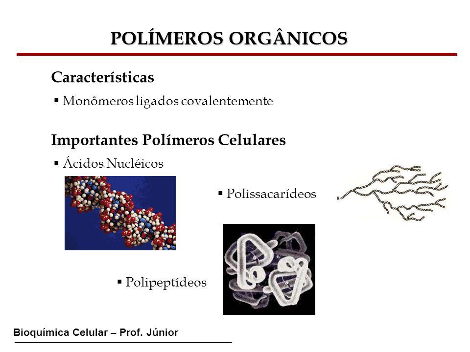 POLÍMEROS ORGÂNICOS Características Importantes Polímeros Celulares
