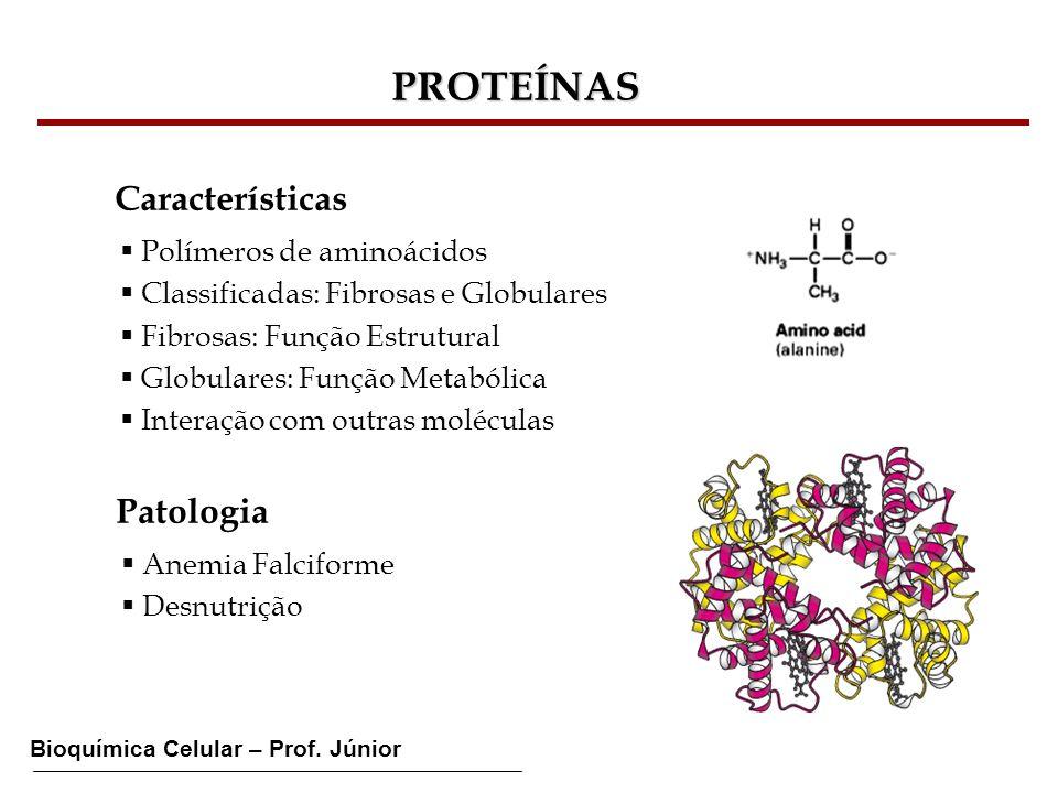 PROTEÍNAS Características Patologia Polímeros de aminoácidos
