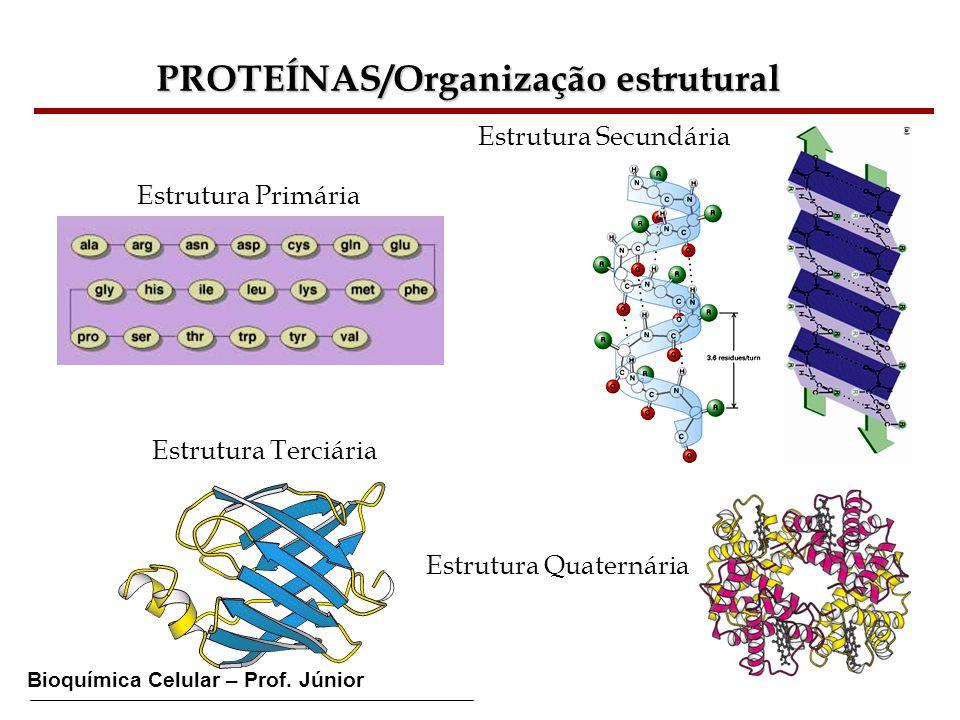 PROTEÍNAS/Organização estrutural