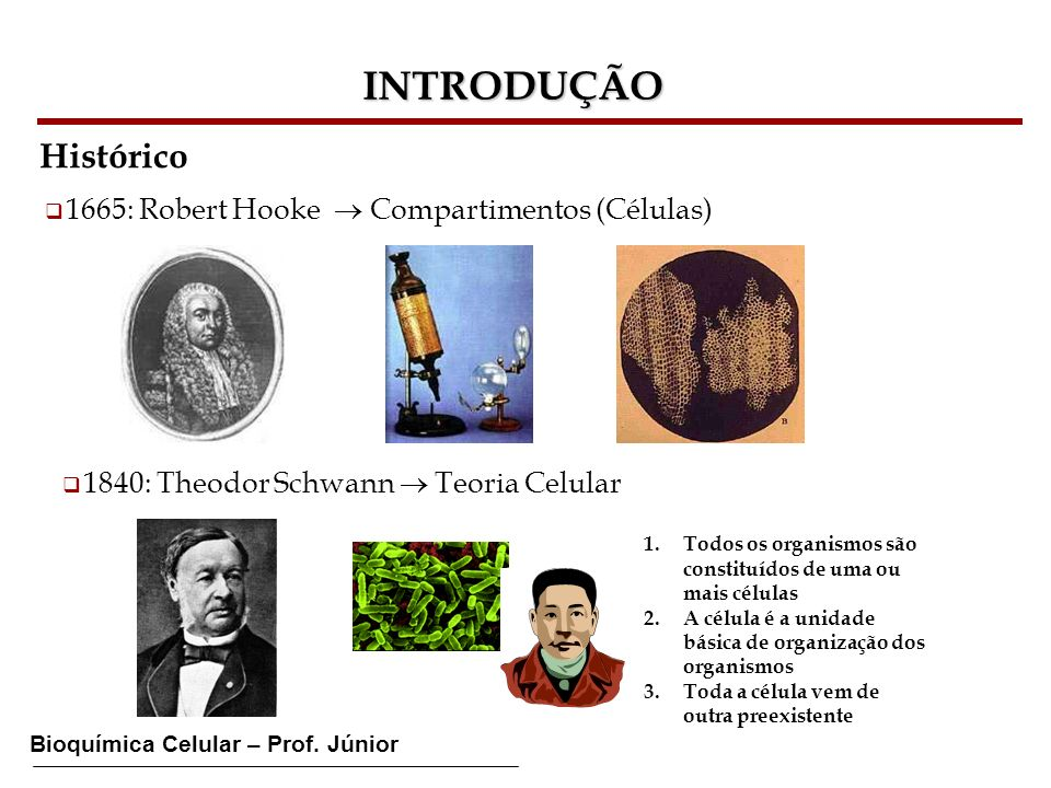 INTRODUÇÃO Histórico 1665: Robert Hooke  Compartimentos (Células)
