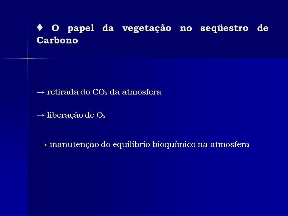 ♦ O papel da vegetação no seqüestro de Carbono