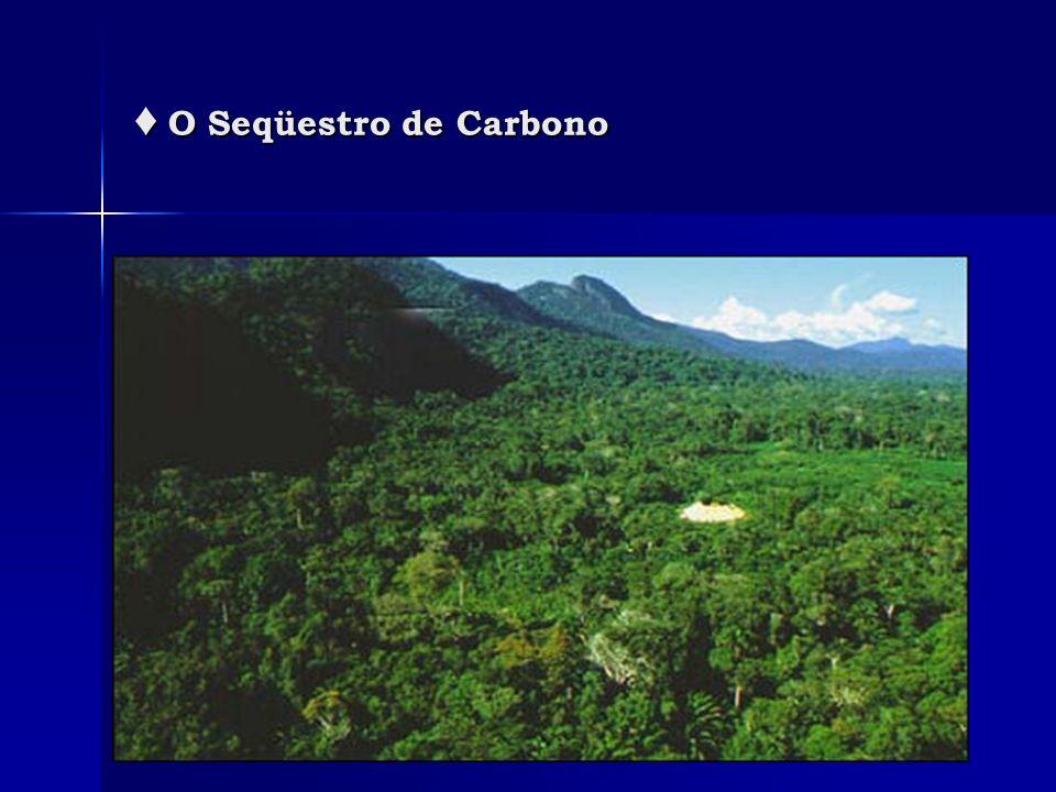 ♦ O Seqüestro de Carbono
