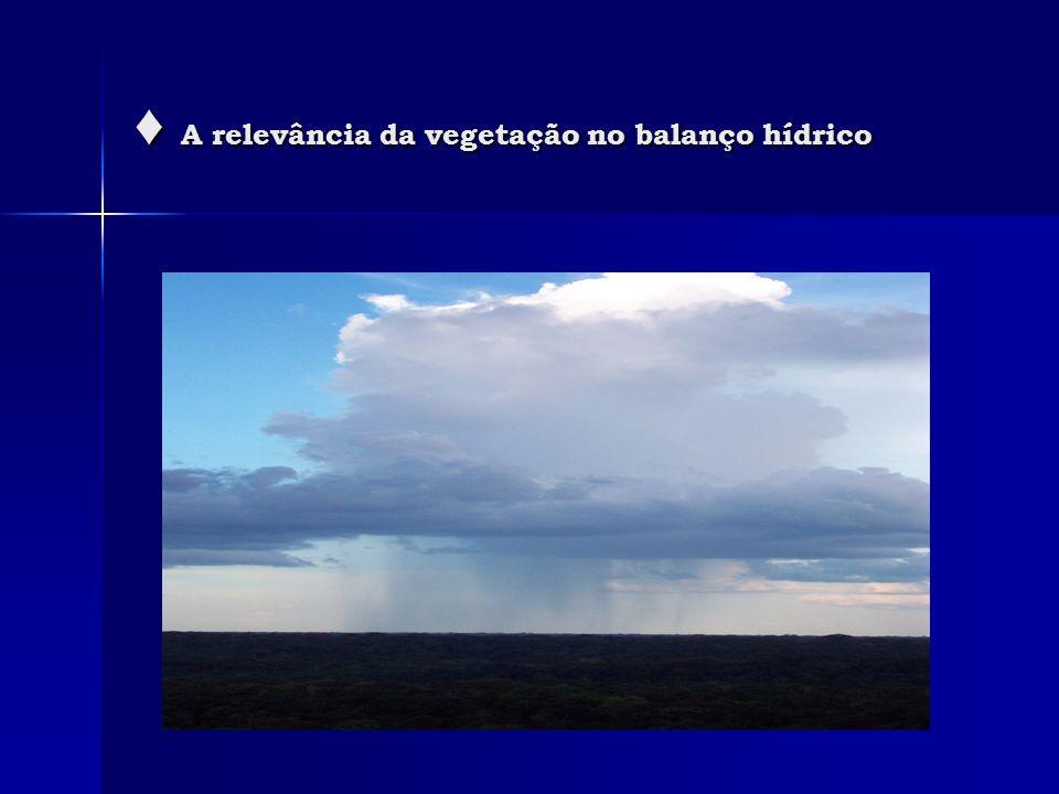 ♦ A relevância da vegetação no balanço hídrico