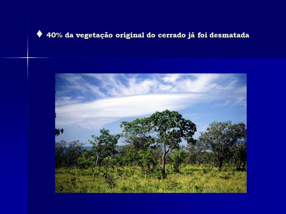 ♦ 40% da vegetação original do cerrado já foi desmatada