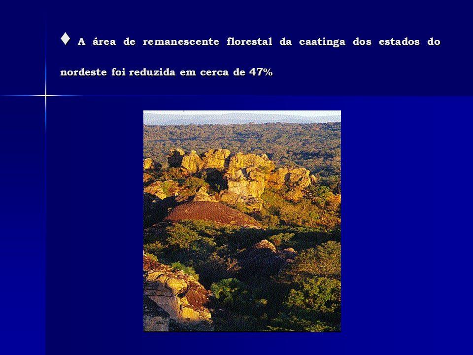 ♦ A área de remanescente florestal da caatinga dos estados do nordeste foi reduzida em cerca de 47%