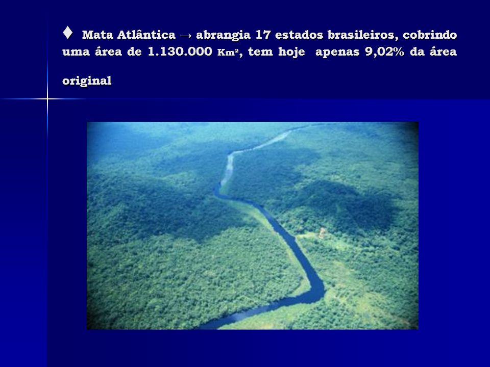 ♦ Mata Atlântica → abrangia 17 estados brasileiros, cobrindo uma área de 1.130.000 Km², tem hoje apenas 9,02% da área original