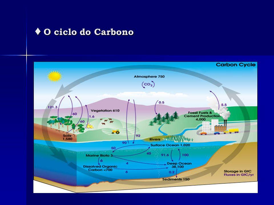 ♦ O ciclo do Carbono