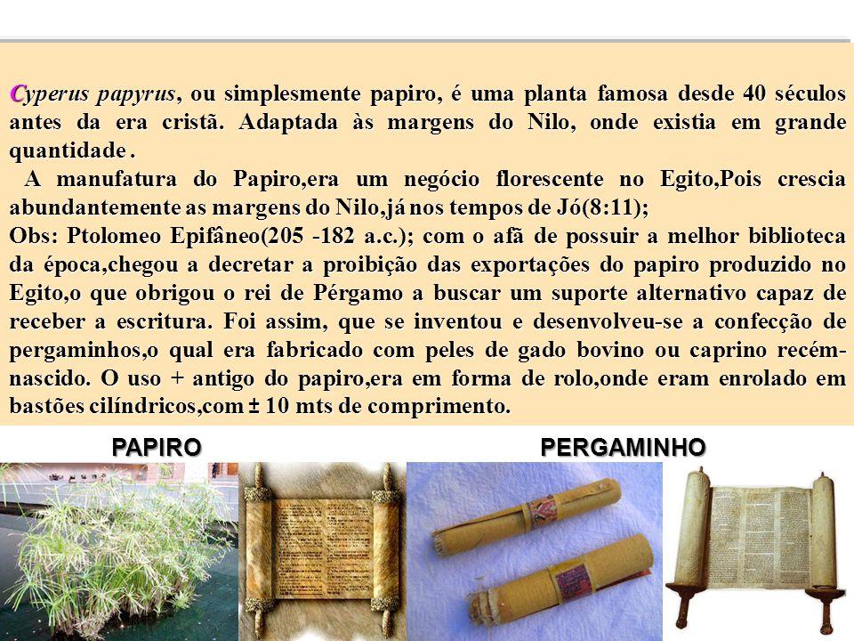 Cyperus papyrus, ou simplesmente papiro, é uma planta famosa desde 40 séculos antes da era cristã. Adaptada às margens do Nilo, onde existia em grande quantidade .