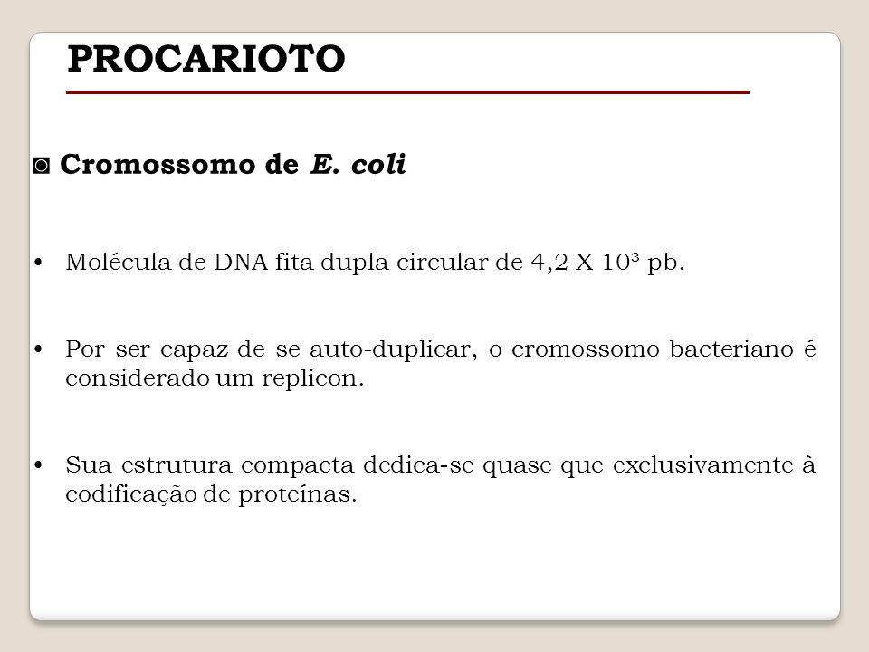 PROCARIOTO ◙ Cromossomo de E. coli
