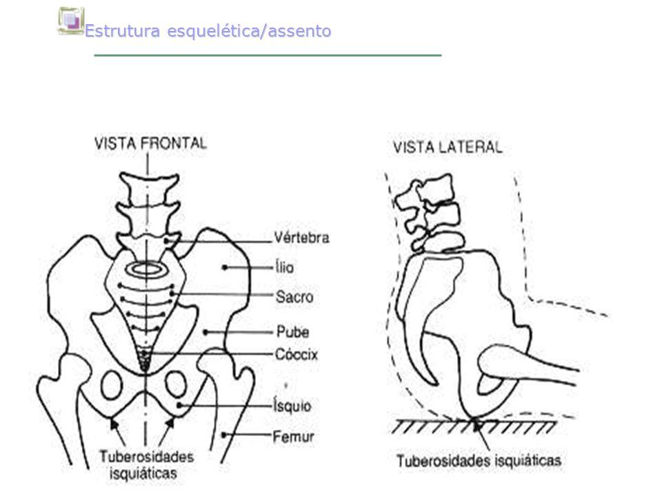 Estrutura esquelética/assento