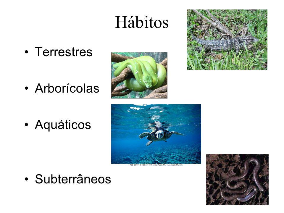 Hábitos Terrestres Arborícolas Aquáticos Subterrâneos