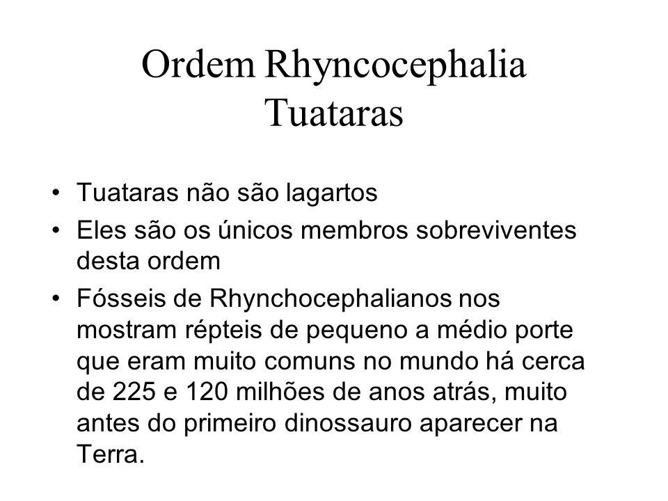 Ordem Rhyncocephalia Tuataras
