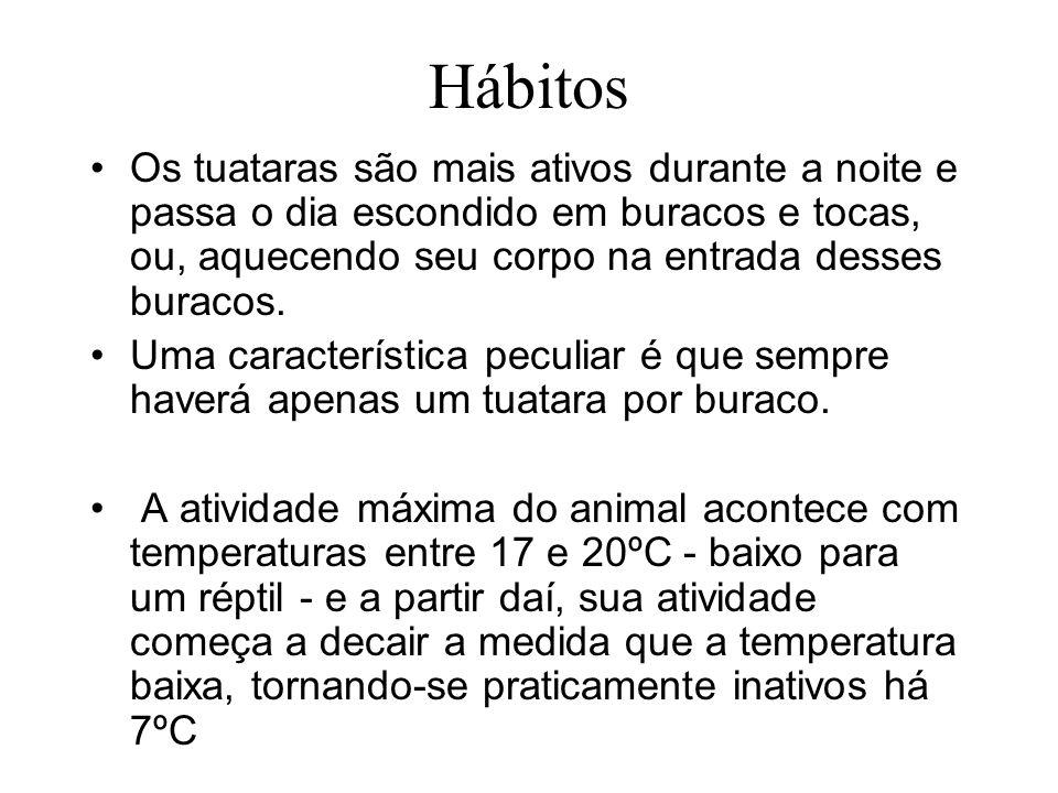Hábitos Os tuataras são mais ativos durante a noite e passa o dia escondido em buracos e tocas, ou, aquecendo seu corpo na entrada desses buracos.