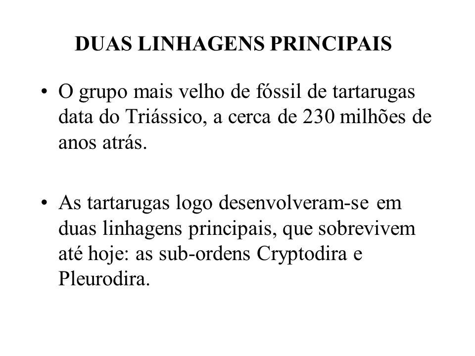 DUAS LINHAGENS PRINCIPAIS