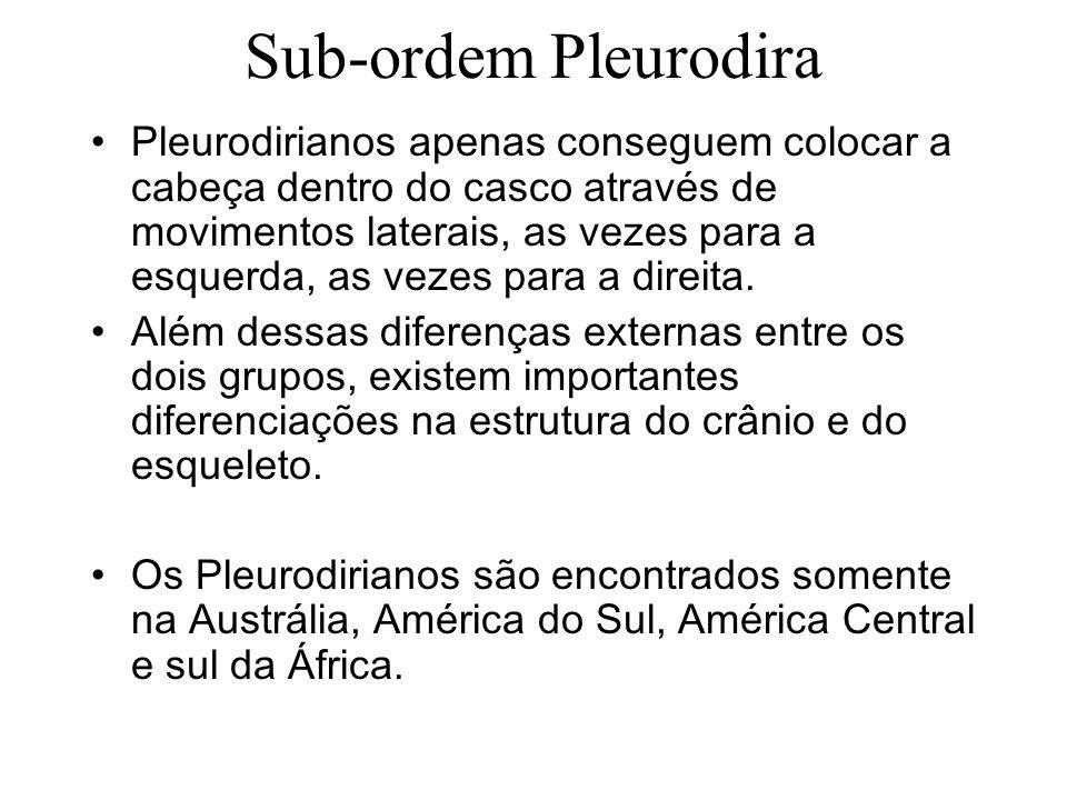 Sub-ordem Pleurodira