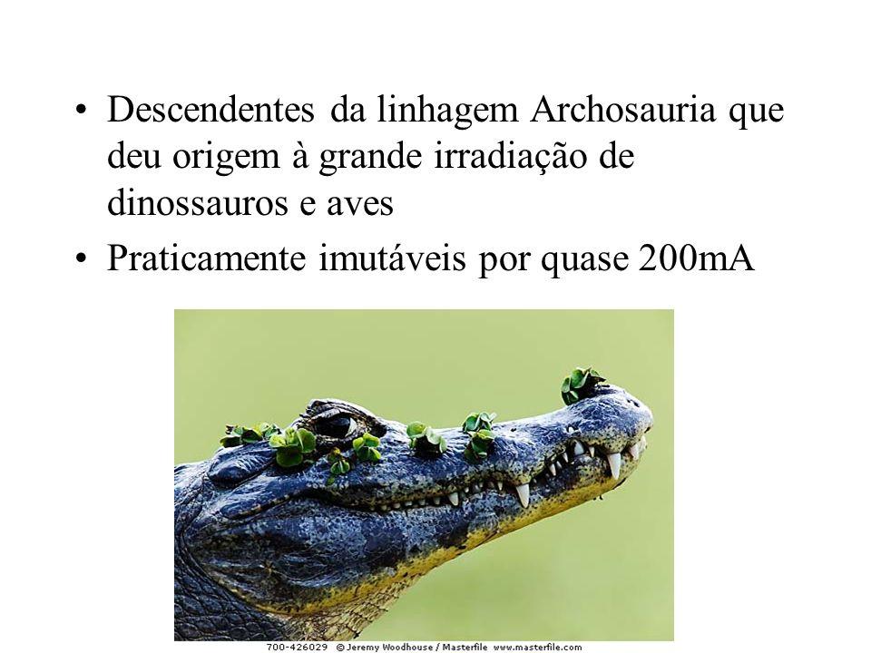 Descendentes da linhagem Archosauria que deu origem à grande irradiação de dinossauros e aves