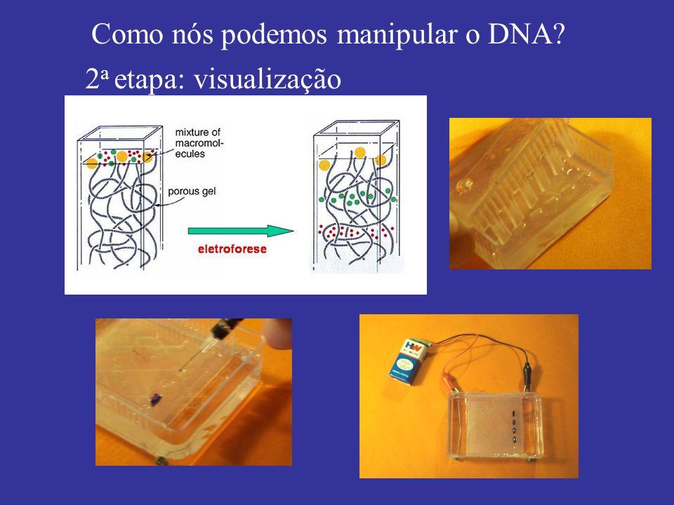Como nós podemos manipular o DNA