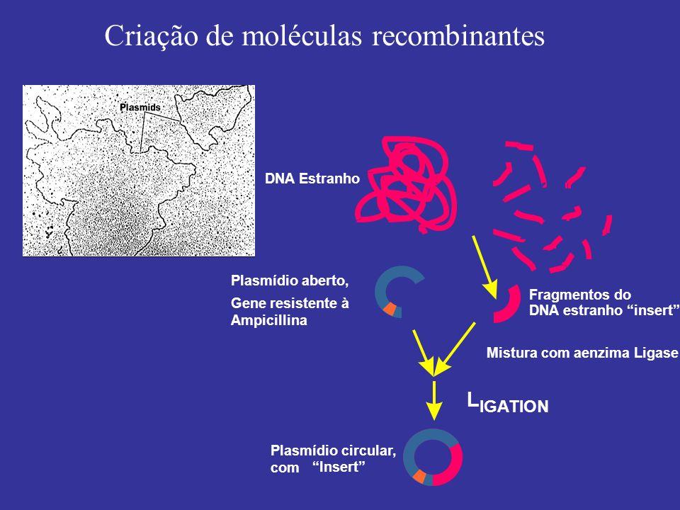 Criação de moléculas recombinantes