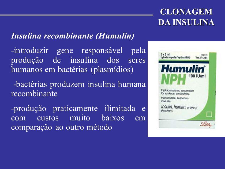 CLONAGEM DA INSULINA Insulina recombinante (Humulin)