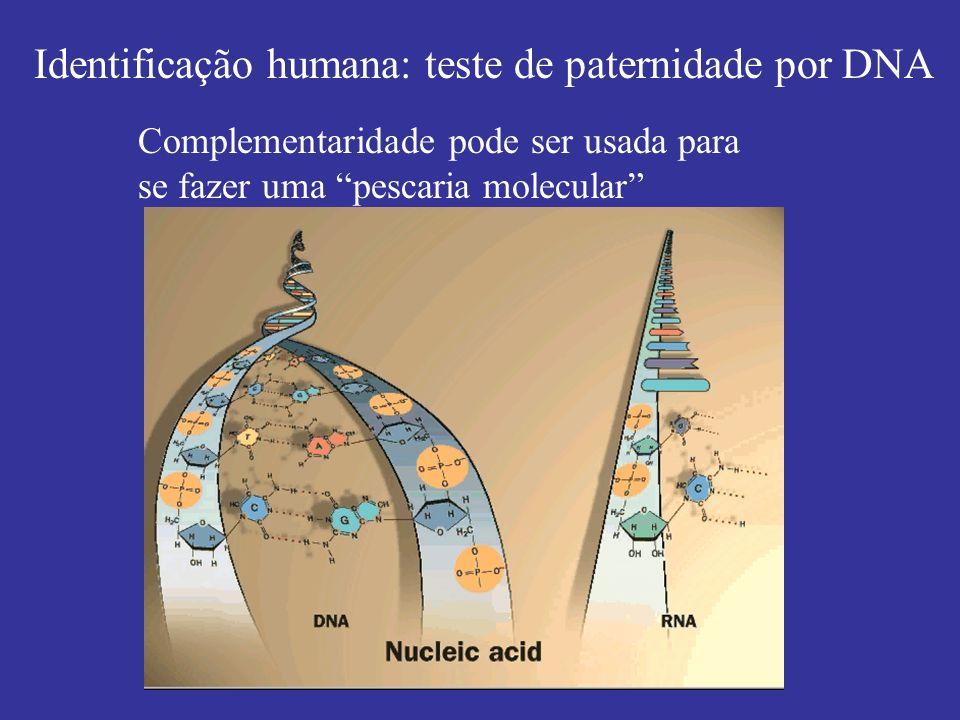 Identificação humana: teste de paternidade por DNA