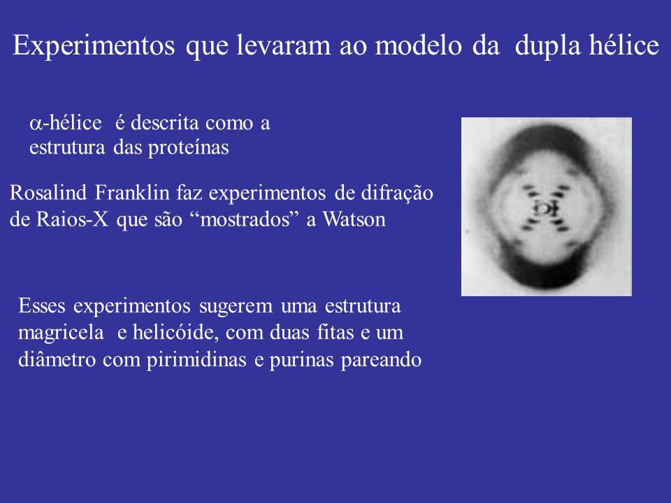 Experimentos que levaram ao modelo da dupla hélice
