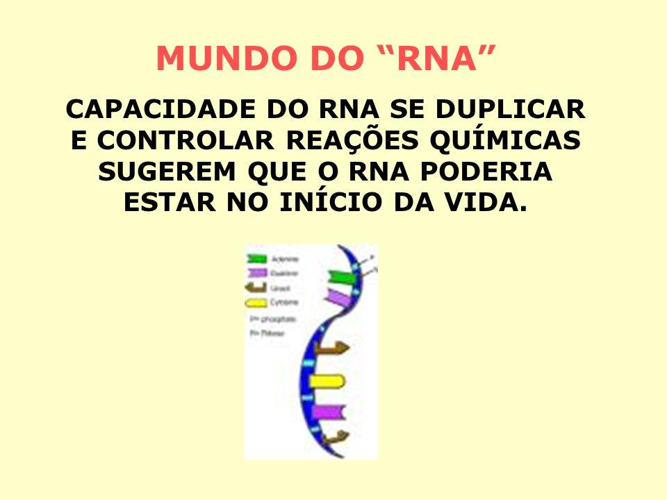 MUNDO DO RNA CAPACIDADE DO RNA SE DUPLICAR E CONTROLAR REAÇÕES QUÍMICAS SUGEREM QUE O RNA PODERIA ESTAR NO INÍCIO DA VIDA.