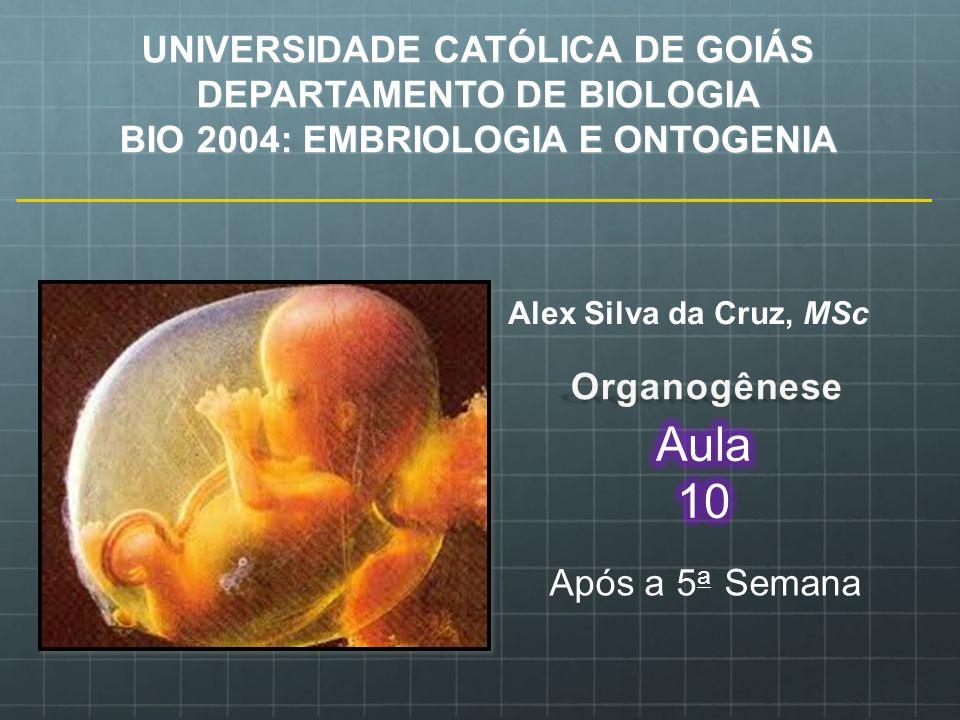 Aula 10 UNIVERSIDADE CATÓLICA DE GOIÁS DEPARTAMENTO DE BIOLOGIA