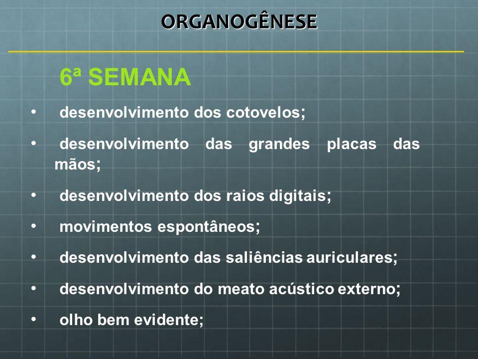 ORGANOGÊNESE 6ª SEMANA desenvolvimento dos cotovelos;