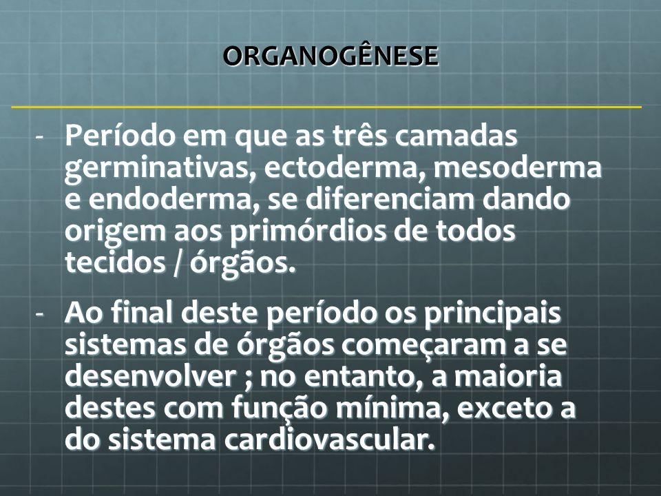 ORGANOGÊNESE