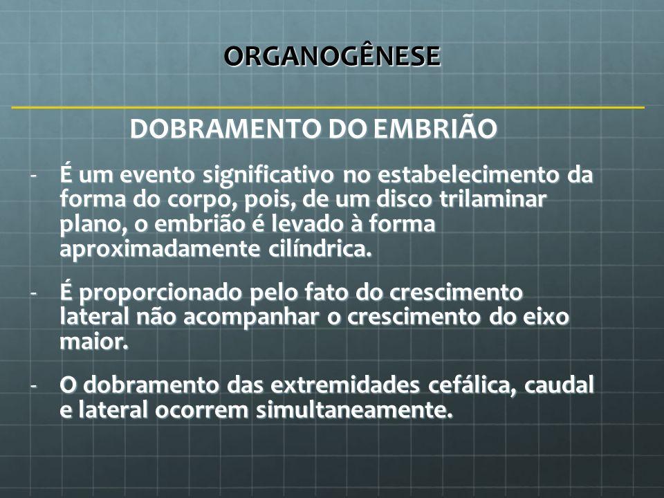 ORGANOGÊNESE DOBRAMENTO DO EMBRIÃO